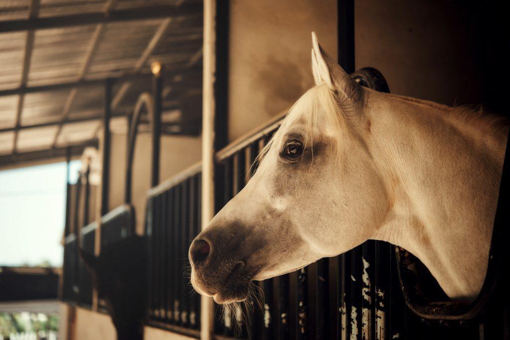 חוות סוסים תמונת רקע