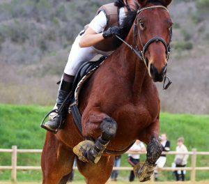 רכיבה אתגרית על סוסים: למי זה מתאים ומה זה דורש מכם?
