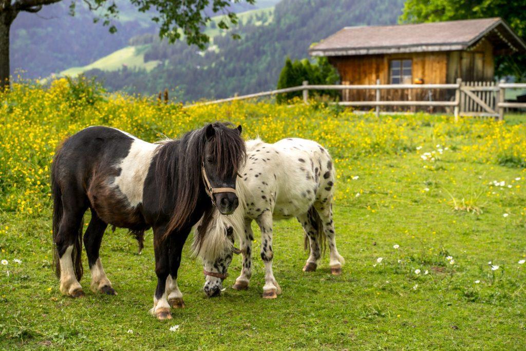 רכיבה על סוס פוני