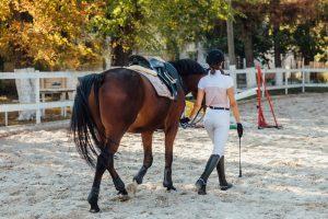7 טיפים להעניק לסוס הצעיר שלך חווית הצגה חיובית